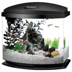 Aqueon LED MiniBow Desktop Aquarium Kit - Black Image
