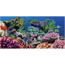 Aquatic Creations Coral Cling Background Image