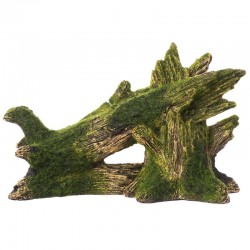 Exotic Environments Fallen Moss Covered Tree Image