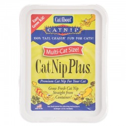 CatA'bout CatNip Plus Easy Grow Kit Image