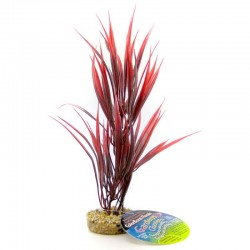 Blue Ribbon Sword Plant with Gravel Base - Red Image