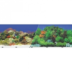 Blue Ribbon Freshwater Garden/Caribbean Coral Reef Dbl Sided Background Image