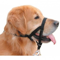 Coastal Pet Walk'n Train Head Halter - Black Image
