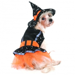 Lookin' Good Witch Dog Costume Image