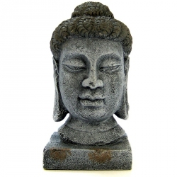 Exotic Environments Oriental Buddha Head Image