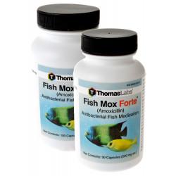 Thomas Labs Fish Mox Forte (Amoxicillin) Image