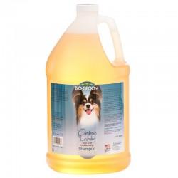 Bio Groom Protein Lanolin Shampoo Image