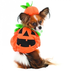 Lookin' Good Pumpkin Dog Costume Image