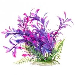 Aquatop Hygro Aquarium Plant - Pink & Purple Image