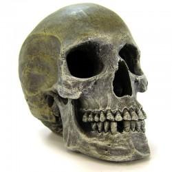 Exotic Environments Human Skull Aquarium Ornament Image