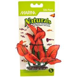 Marina Red Silk Foreground Plant Image