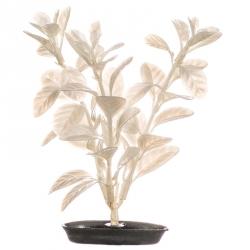 Marina Pearlscaper Ludwigia Plant - White Pearl Image