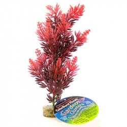 Blue Ribbon Bush Plant with Gravel Base - Red Image