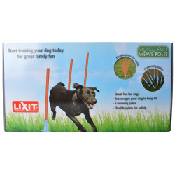 Lixit Agility Fun Weave Poles for Dogs Image