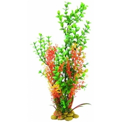 Aquatic Creations Green Bacopa Plant Image