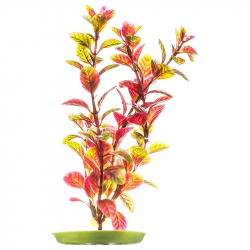 Marina Aquascaper Red Ludwigia Plant Image