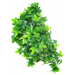 Zoo Med Natural Bush - Congo Ivy Image