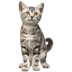 Clearance Pet Supplies Sale -- Clearance Products