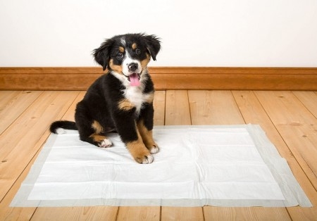 Hartz Home Protection Unscented Dog Pads Extra Large alternate img #5
