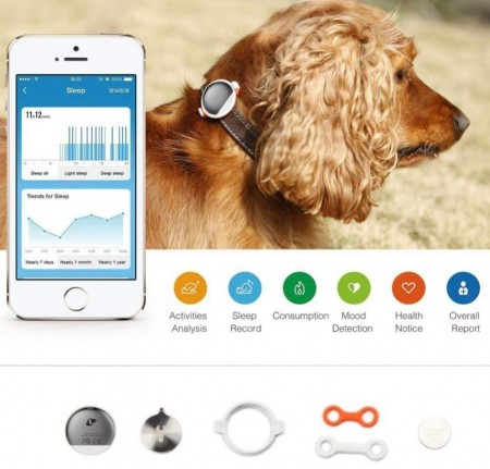 PetKit Fit P2 Pet Activity Monitor Gold alternate img #4