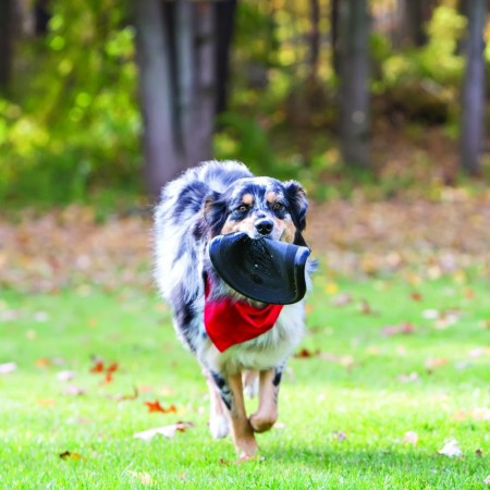 KONG Extreme Flyer Disc Dog Toy alternate img #3