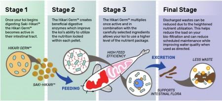 Hikari Saki-Hikari Growth Enhancing Koi Food - Medium Pellets alternate img #2