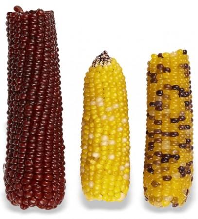 Vitakraft Mini-Pop Corn Treat for Pet Birds alternate img #2