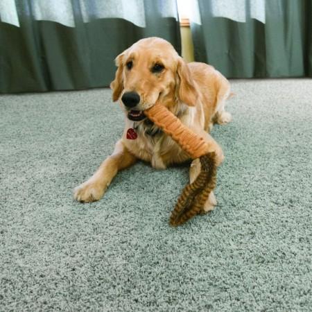 KONG Bendeez Tailz Dog Toy - Dark Brown alternate img #3
