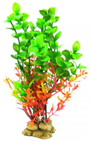 Aquatic Creations Green Bacopa Plant alternate img #1