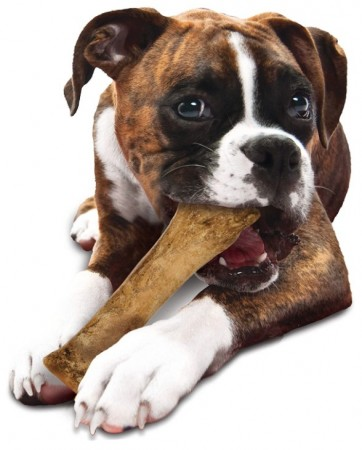 Nylabone Healthy Edibles All-Natural Long Lasting Bacon Chew Treat Souper alternate img #3