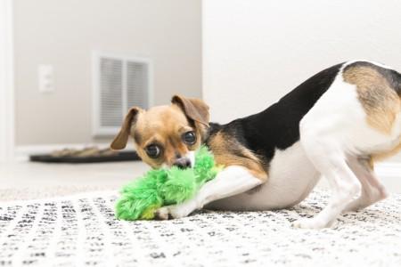 KONG Plush Frog Dog Toy alternate img #3