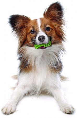 Nylabone Natural Nutri Dent Fresh Breath Limited Ingredients Mini Dog Chews alternate img #4