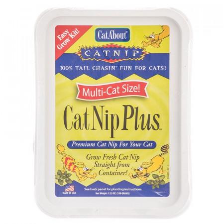 Gimborn CatAbout CatNip Plus Easy Grow Kit alternate img #1