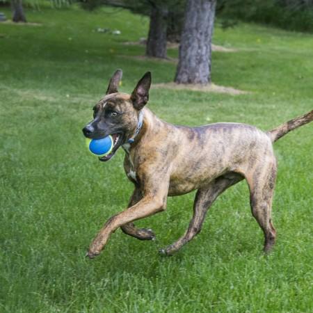 KONG Ultra Squeakair Ball Dog Toy alternate img #3