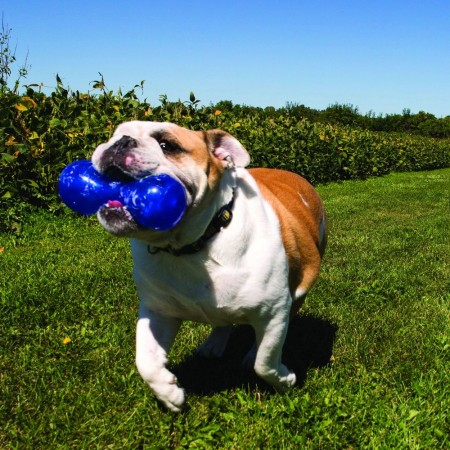 KONG Squeezz Dumbbell Dog Toy alternate img #4